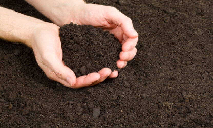 Which Topsoil Supplier Is Right And Best For Your Needs?