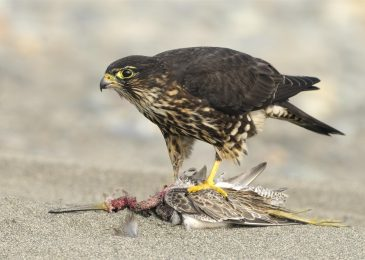How To Look For The Best Bird Pest Control Service Providers?