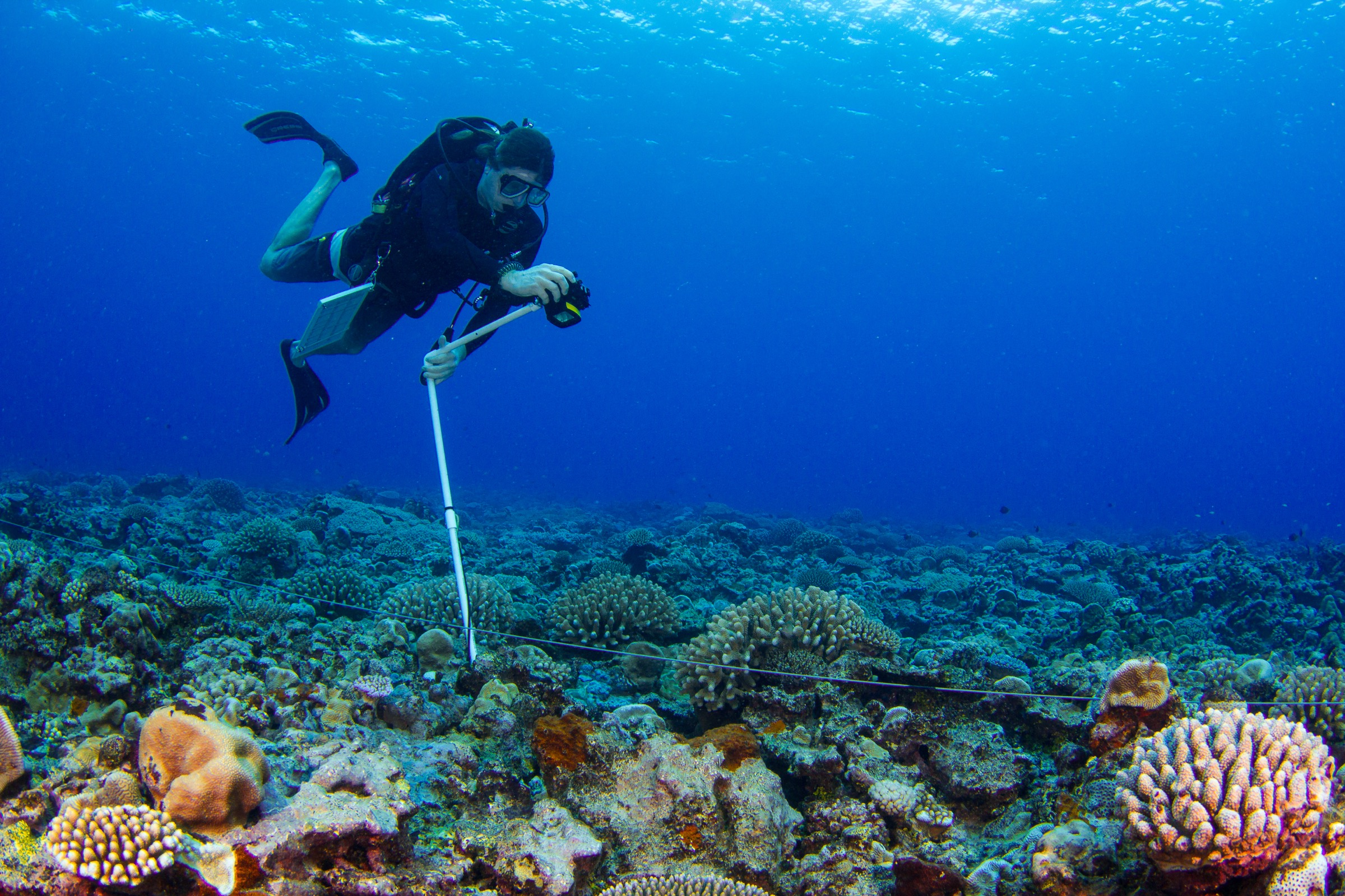 Everything About Reefs With Reel Affair
