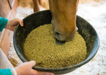 Feeding Your Stallion: What To Consider