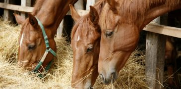 The Impacts Of Climate Change On Horses In The UK