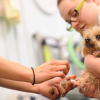 Affording The Health Care Your Pet Needs