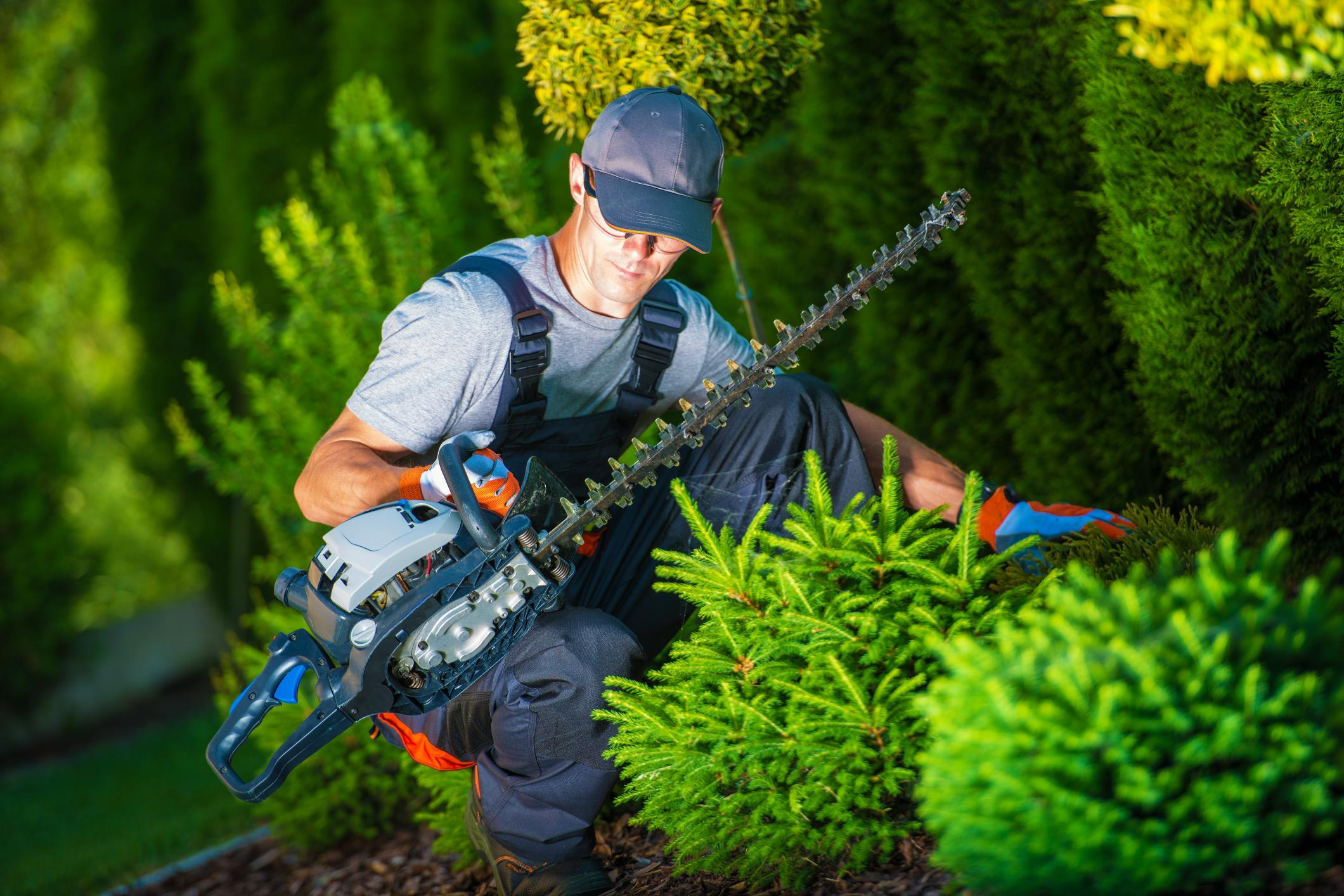 Top 3 Benefits Of Tree Surgery Services For You