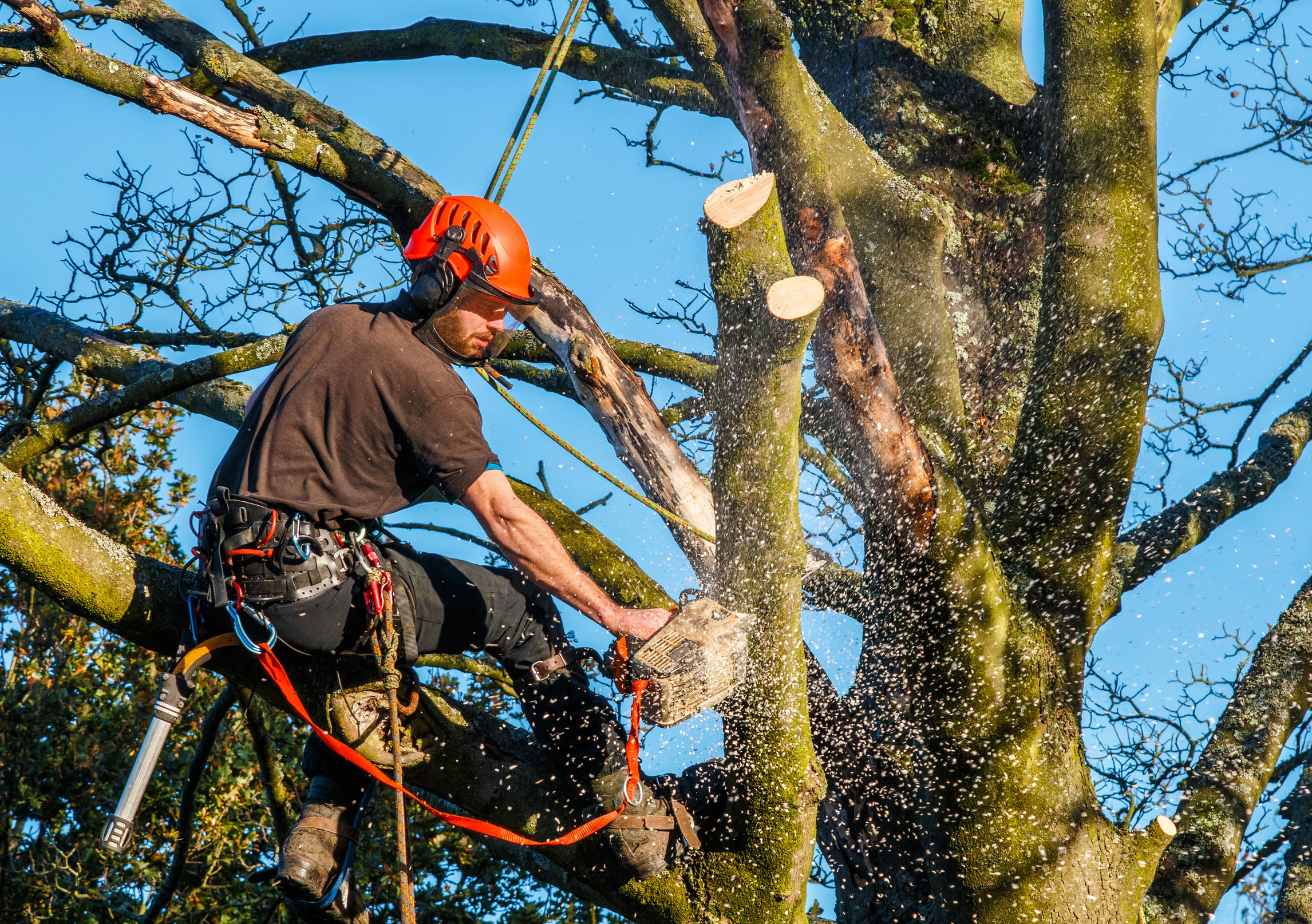 Why There Is Need To Hire A Qualified Tree Surgeon?