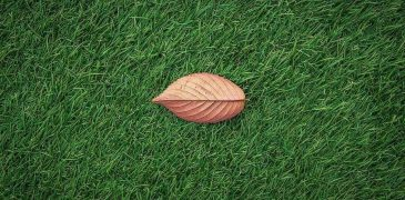 The Most Popular Types Of Artificial Grass And Its Advantages
