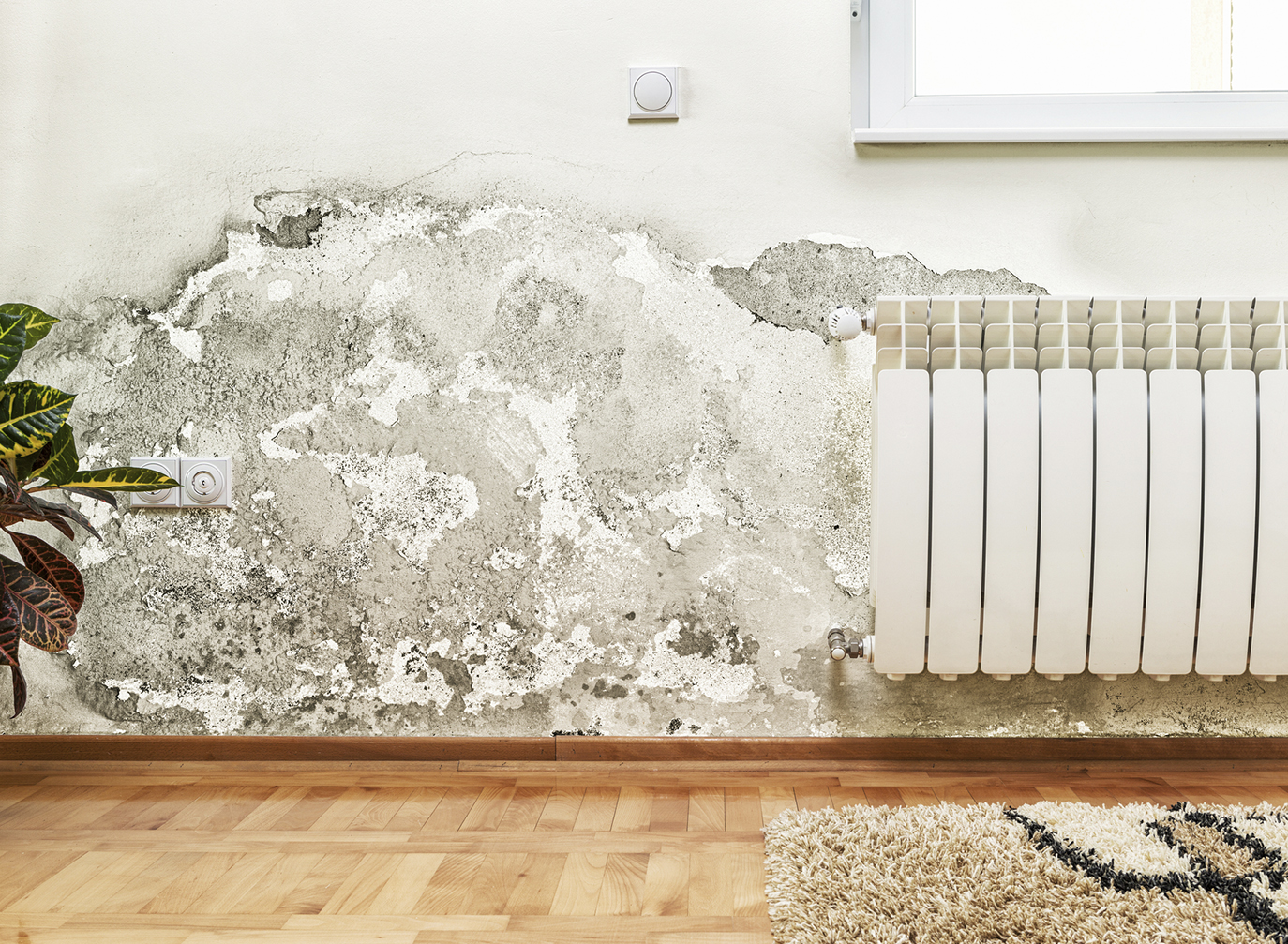 How To Get Rid Of Problems Due To Dampness In Your Home?