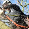 Why Choose Professional Tree Surgeons In Harrow