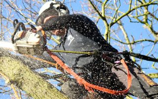 Why Choose Professional Tree Surgeons In Harrow